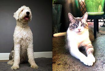 Heights Arts Pet Project sample photos