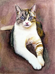SAMPLE CAT PORTRAIT