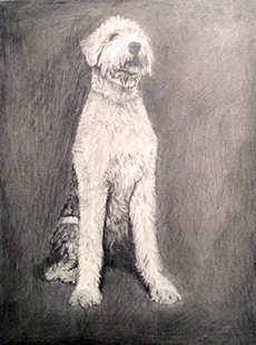SAMPLE DOG PORTRAIT